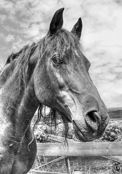 Quarter Horse Portrait by Jim Sauchyn