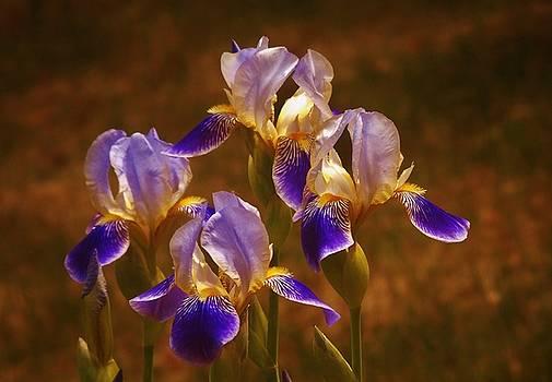 Quarto Iris by Barbara St Jean