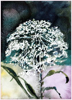 Queen Ann Lace by Mindy Newman