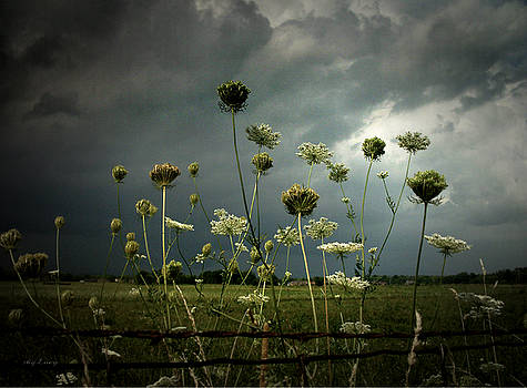 Queen Anne's Lace 3 by Cynthia Lassiter