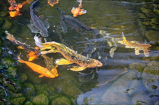 Queen of the pond by Ron Morecraft