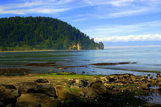 Marty Koch - Quiet Bay