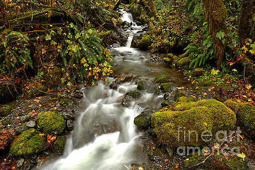 Quinault Rainforest Flow by Adam Jewell