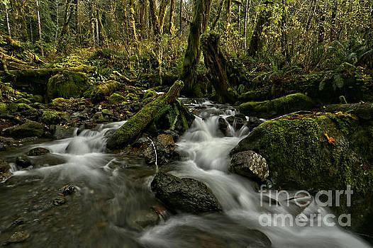 Quinault Rainforest Stream by Adam Jewell