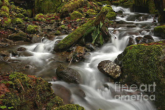 Quinault Rainforest Stream At Olympic National Park by Adam Jewell
