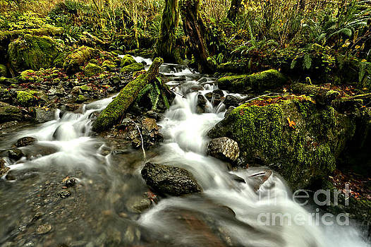 Quinault Rainforest Streams by Adam Jewell
