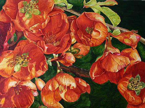 Quince by Helen Shideler