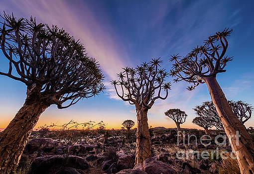 Inge Johnsson - Quiver Trees 13