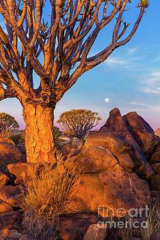 Inge Johnsson - Quiver Trees 8