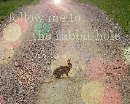 Rabbit Hole by Carol Phipps