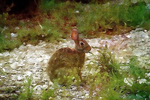 Rabbit Painted by Ericamaxine Price