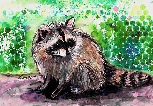 Raccoon  by Kimbo Jackson