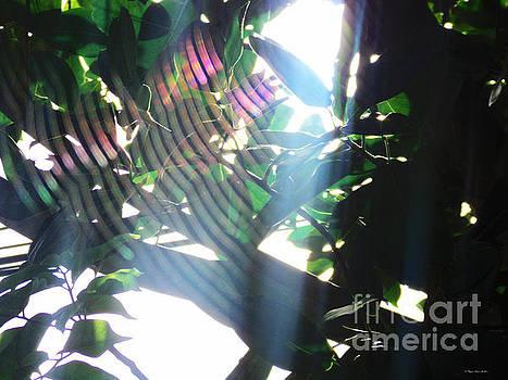 Radiance by Megan Dirsa-DuBois