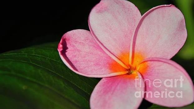 Radiant Bloom by Pamela Blizzard