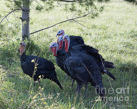 Rafter of Wild Turkeys by Barbara McMahon