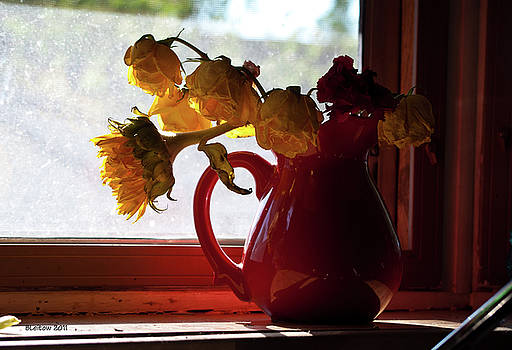 Raggedy Blooms by Brenda Leitow