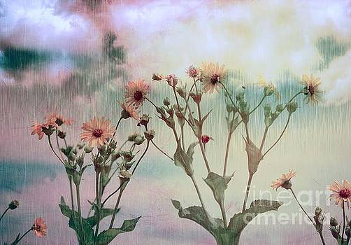 Rain Dance Among the Flowers by Elaine Manley