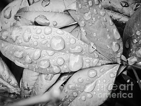 Rain Drops by Robin Coaker