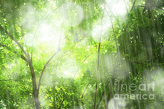 Rain In Tropical Forest by Atiketta Sangasaeng