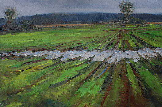 Rain Puddled in Corn Field by James Reynolds