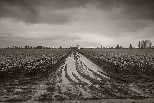 Stormy Monday by Bob Stevens