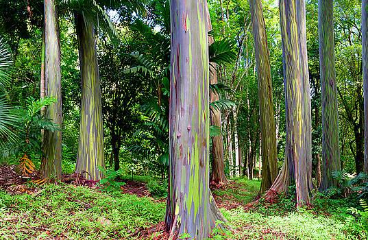 Rainbow Eucalyptus by Monica and Michael Sweet