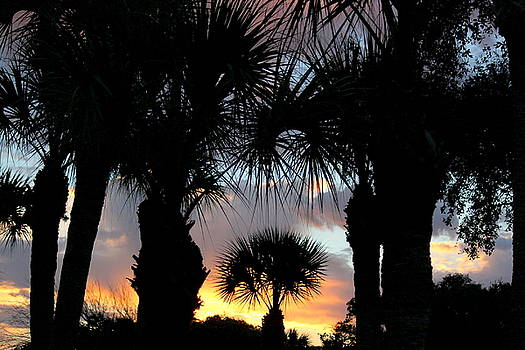 Rosanne Jordan - Rainbow Morning through the Palms