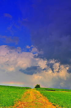 Emily Stauring - Rainbow Path