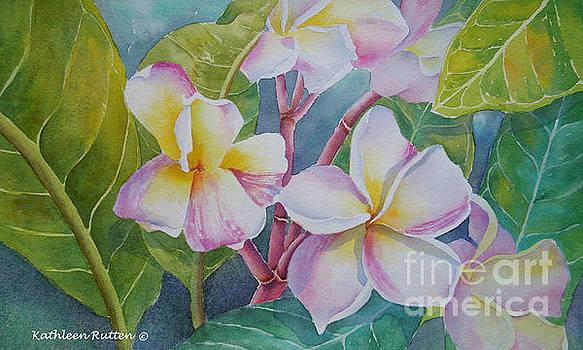 Rainbow Plumeria's by Kathleen Rutten