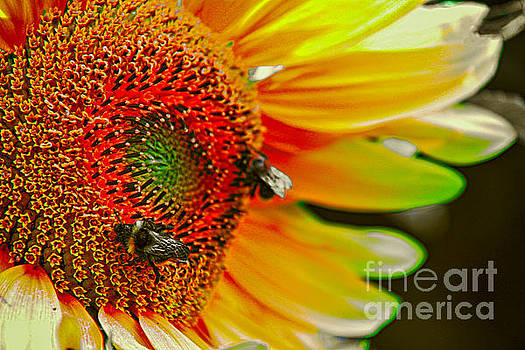 Rainbow Sunflower by Mariola Bitner