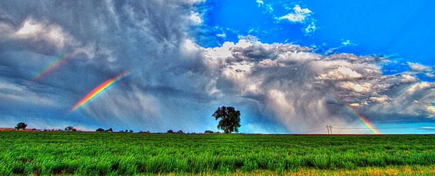 Rainbow Tree by Scott Mahon
