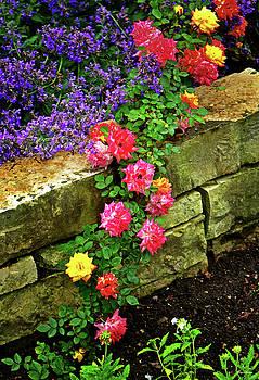 Rainbows End Rose 001 by George Bostian
