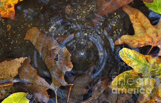Raindrop by Dan Holm