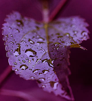 Raindrops by Chayla Brown