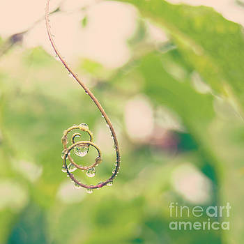 Raindrops on Curled Lilikoi Tendril - Hipster Photo Square by Charmian Vistaunet