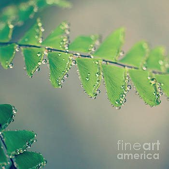 Raindrops on Ferns - Hipster Photo Square by Charmian Vistaunet