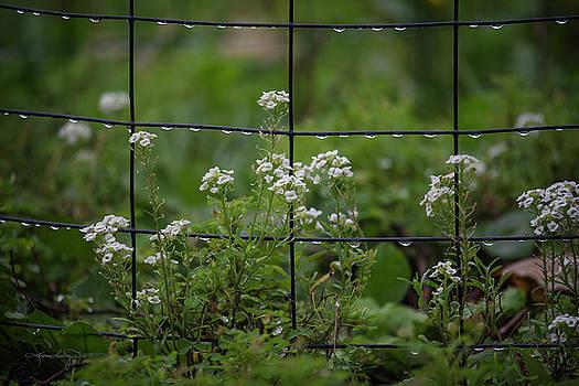 Raindrops on the Garden Fence by Karen Casey-Smith