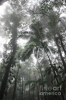 Rainforest by AR Annahita
