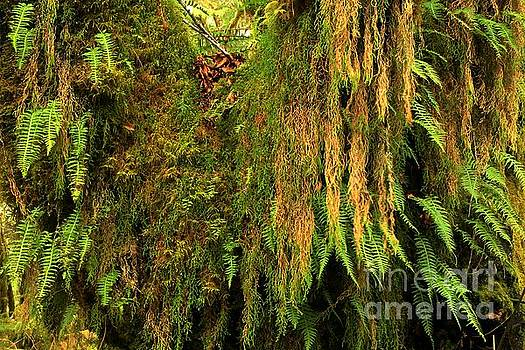 Adam Jewell - Rainforest Hanging Gardens
