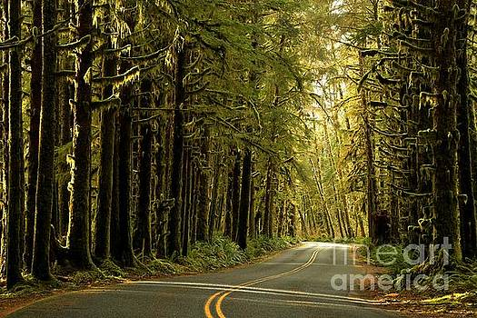Adam Jewell - Rainforest Light