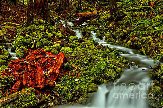 Rainforest Reds And Greens by Adam Jewell
