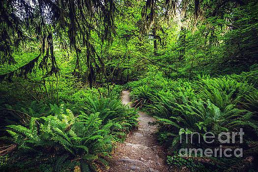 Rainforest Trail by Joan McCool