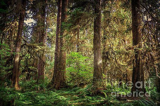 Rainforest Trees by Joan McCool