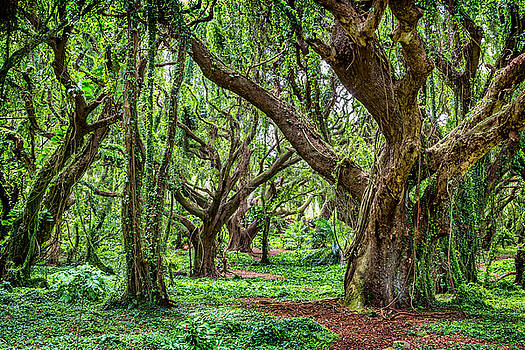 Rainforest Trees by Kelley King