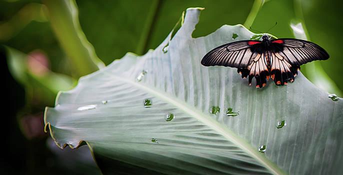 Raining Wings by Karen Wiles