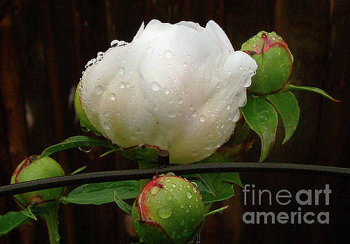 Rainy by Betsy Zimmerli
