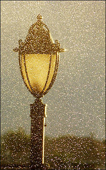 Rainy Day Lamp Post by Geraldine Alexander