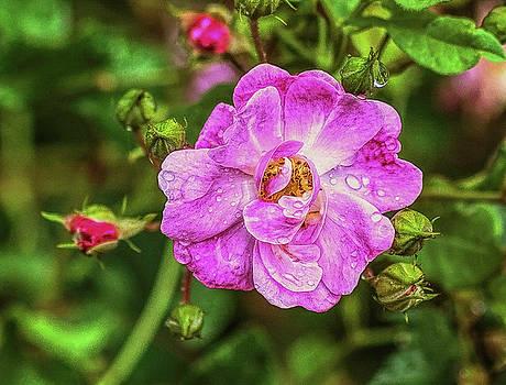 Rainy Flowers by Jeff Oates Photography
