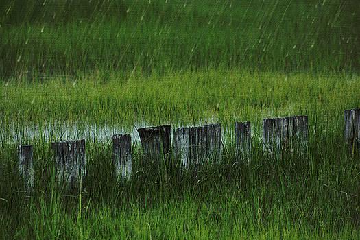 Rainy Marsh by Sheryl Bergman
