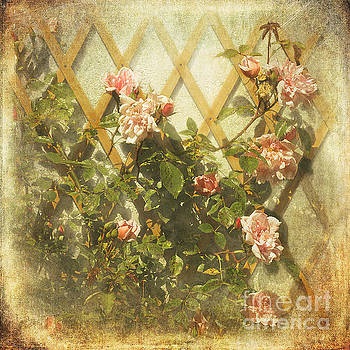 Liz  Alderdice - Rambling Rose